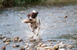 Alimentation canine - Chien en bonne santé