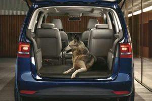Transport de chien en voiture - Chien à l'arrière voiture non attaché, sans cage