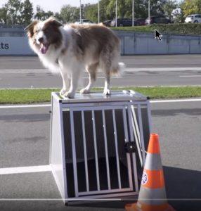 Transport de chien en voiture - Chien sur sa cage