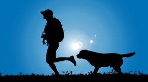 Chien seul - Mon ami le chien
