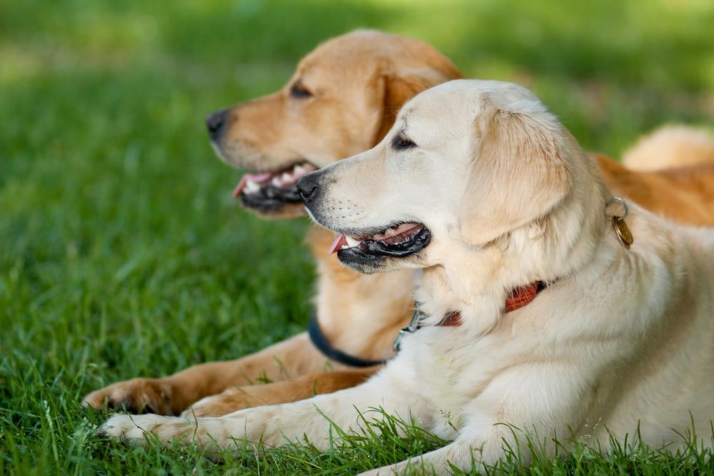 Plantes m dicinales utiles mon ami le chien - Image patte de chien gratuite ...