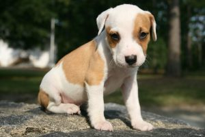Vermifuger son chien - Chiot