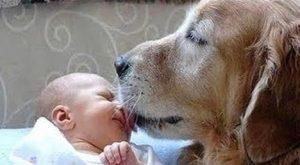 Vermifuger son chien - Chien léchant bébé