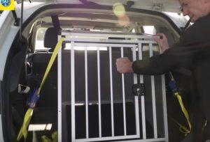 Cage pour chien attachée dans le coffre d'une voiture