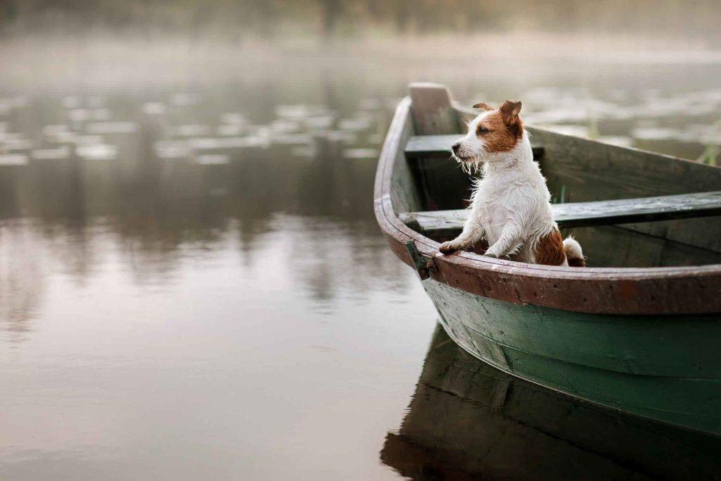 Chien dans barque pret a partir voyager