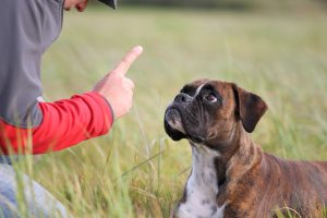 Dressage et avertissement du chien qui aboie
