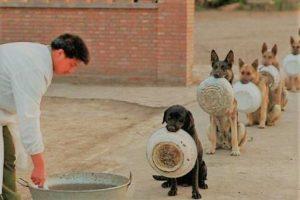 Anxiété du chien en groupe