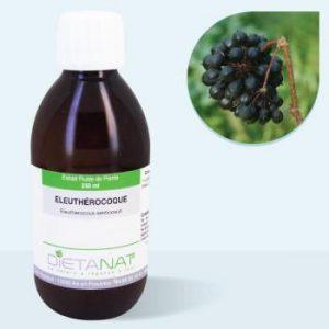 Phytothérapie canine - Eleuthérocoque - Extrait plante fraîche