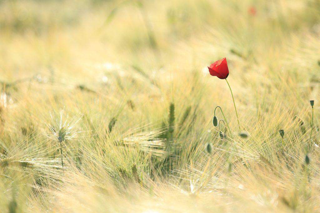 Tique-en embuscade-dans-hautes-herbes