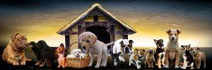 Choisir-son-chien-en-fonction-de-sa-personnalite