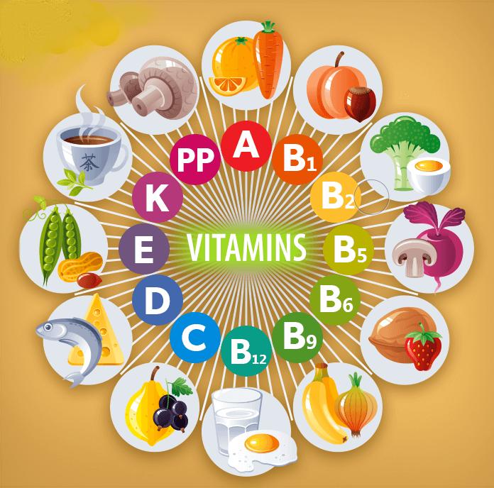 Liste-montrant-vitamines-chien-les-plus-utilisees