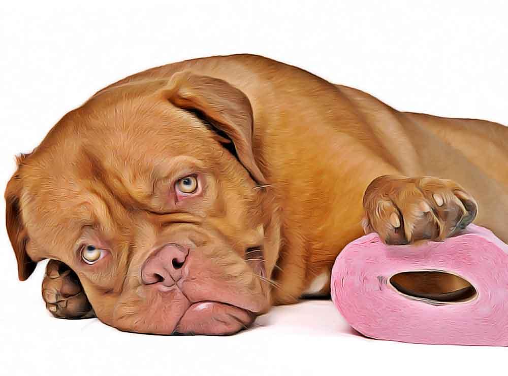 Constipation-chien-traitement-a-ne-pas-faire