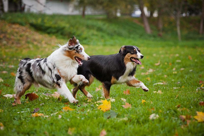 Exercice-régulier-contre-constipation-chien
